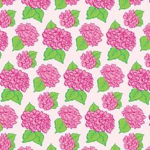 Fuchsia Hydrangeas