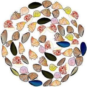 Shell patterns Swirl