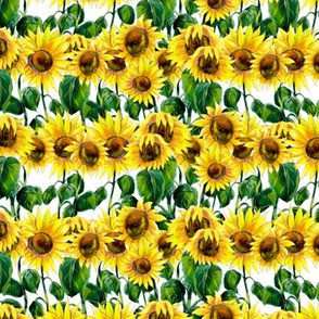 Colorful sunflowers watercolor hand drawn seamless pattern design