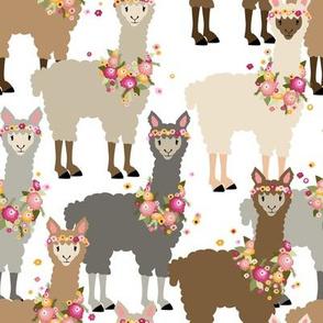 alpacas on parade
