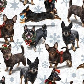 Lancashire Heeler Christmas Pattern