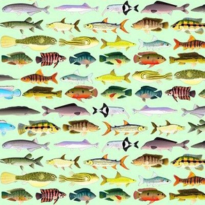 22 African River Fishes on green