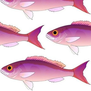 Crimson Jobfish Opakapaka
