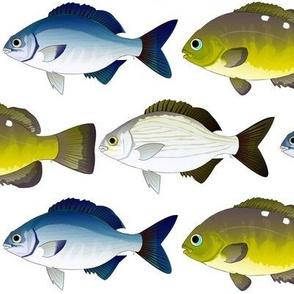 3 sea chubs
