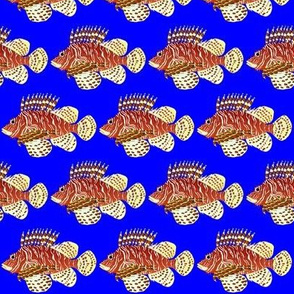 Red Lionfish on blue
