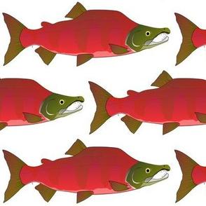 Sockeye Kokanee Salmon male