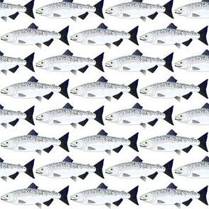 Chinook King Salmon