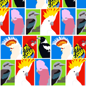 Australian Birds Flock Together