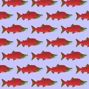 Sockeye Kokanee Salmon Male on purple