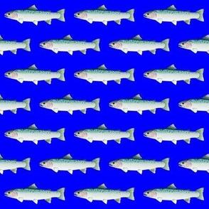Steelhead on dark blue