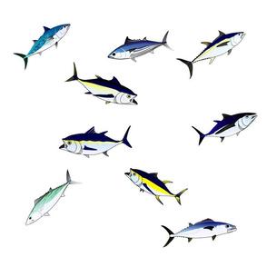 9 Tuna Scatter