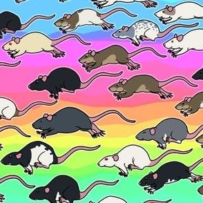 Pastel Rainbow Rats