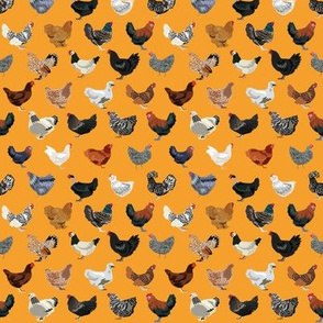 TINY - chicken breeds fabric - chicken fabric, farm fabric, farmhouse fabric, bird, birds fabric, -  orange