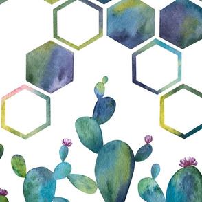 Honeycomb Cactus