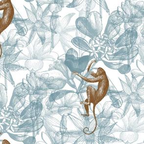 monkey flowers blue
