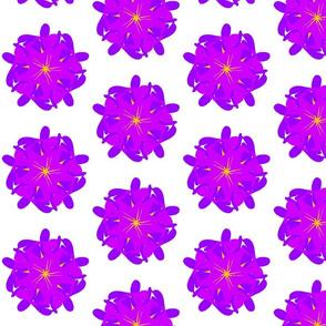 Funky Flower Purple Wonder Flower
