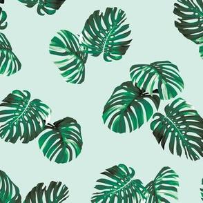 Montsera - Mint