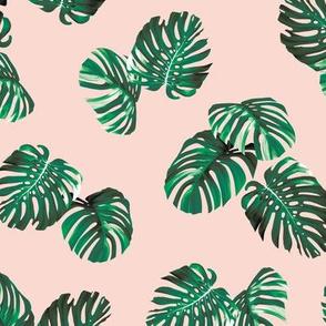 Montsera - Pink
