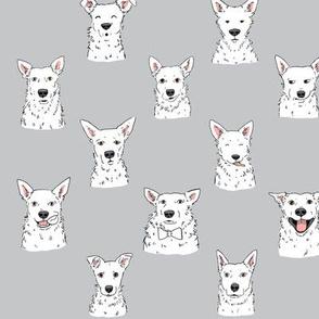 White Cattle Dogs Glacier Gray Background