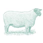 TEA TOWEL SHEEP EUCALYPTUS