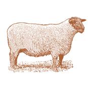 TEA TOWEL SHEEP COPPER