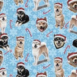 The Christmas Japanese Shiba Inu Dog