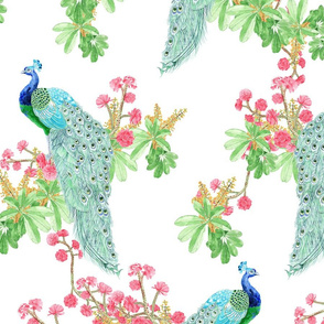 tramuntana peacock variant