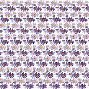 Lotus Flower SM