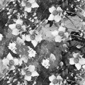 climbing floral rpt black _ white lg sp