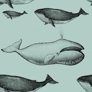 whale blue vintage