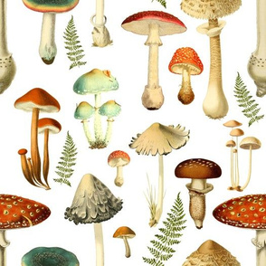 Toadstools, White Background
