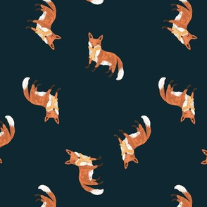 Fall Foxes on Navy