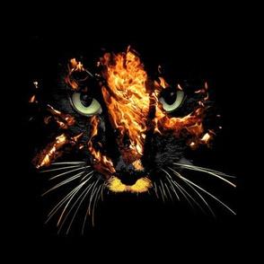 Fire cat on black swatch