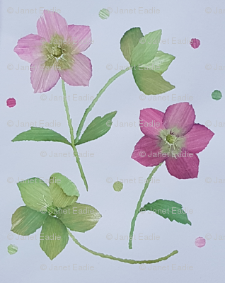 Hellebores_in_winter_preview