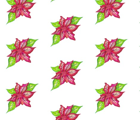 Rpoinsettia-white-background_contest281281preview