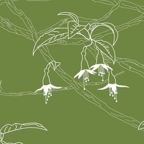 Kōtukutuku (green)