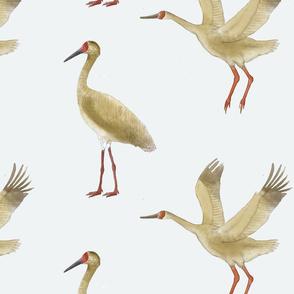 Critically endangered Siberian crane pattern