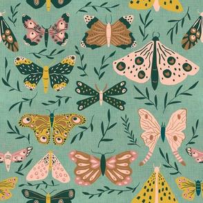 Fine Moths