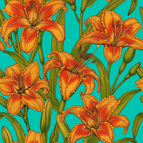 Tawny day-lily flowers, turquoise bg