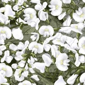 Hardenbergia white out