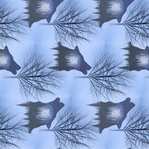 Winter forest wolf