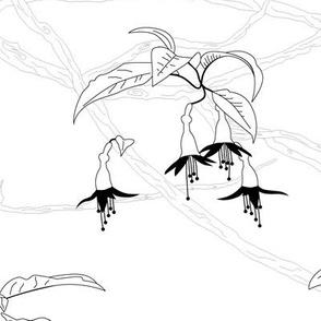 Kōtukutuku (b&w)
