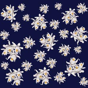 White Sunakhari