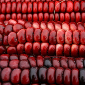 Red Indian Corn for scarf (1 of 1)