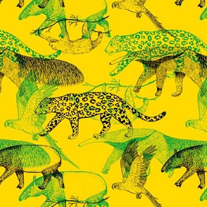 Wildlife of Amazonia