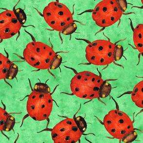 Large Ladybugs