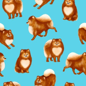 Pomeranians (Blue Background)