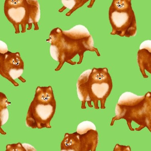 Pomeranians (Green Background)