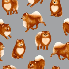 Pomeranians (Grey Background)