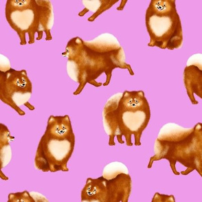 Pomeranians (Violet Background)